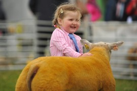 Beltex National Show at Armagh 2012 Online