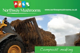 Northway Mushroom Video Compost Making
