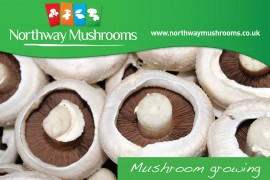 Northway Mushroom Video Growing Mushrooms