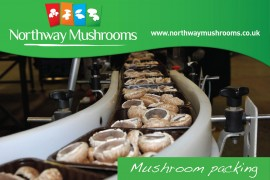 Northway Mushroom Video Packing Mushrooms