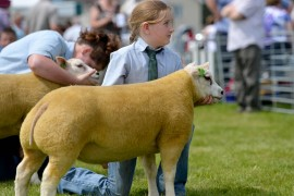 NI Beltex National Show photos now online