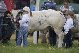 Tinahely Show photos now online