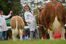 Celtic Sires National Calf Finals – Strokestown pics online