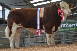 Curaheen tops Irish Simmental sale at 18500 euro
