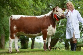 Images on line for Clogher Valley Show
