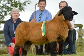 Irish Suffolk sale images now online