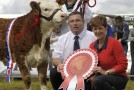 Celtic Sires sponsor Strokestown Calf finals – Sat 09 September