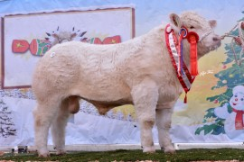 Bostonia Herd top the Christmas Cracker Sale