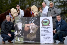 Hereford Dungannon Sale photos now online