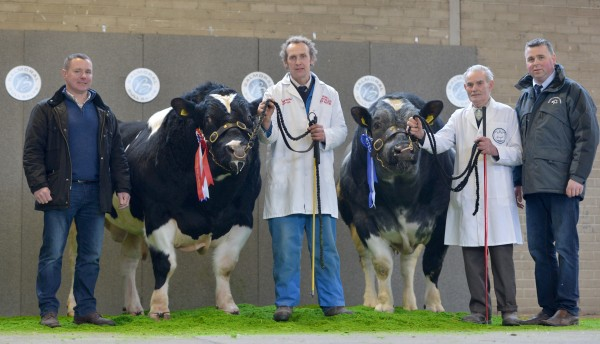 Andy Ryder, British Blue Society pictured with champion British Blue from James Martin, Reserve Champion from Jack Morrison, and Richard Beattie after a successful spring bull sales at Balmoral. Click the link below to view more photos