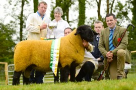 Irish Suffolk from Athenry Sheep event now online