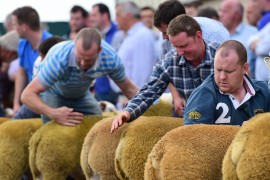 NI Texel Premier Sale images now on line