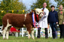 Irish Simmental Calf Champion photos now online