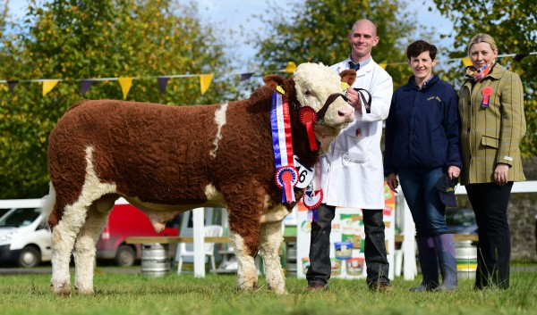 James Brown lifted the Senior Bull Calf Champion at Strokestown show, pictured with Angela Brickley, Celtic Sires and judge Sharon Rothwell