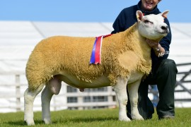 Bumper Entry for Balmoral Ram Sales Saturday 3rd September