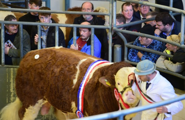 Sale topper Clonagh Go Go Dancer exhibited by the Behan sold for 8700 euro