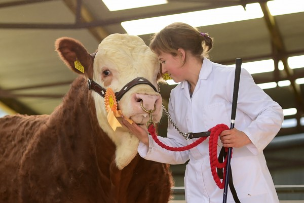 A delighted Jenny Aherne with her bull Towerhill Happy Harry selling for 8000 euro  to the Woods family Popes Herd.