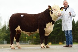 Elite Hereford Breeders images now online