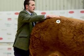 Irish Limousin Roscrea images now online