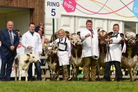 Moiled and Dexter cattle Balmoral photos now online