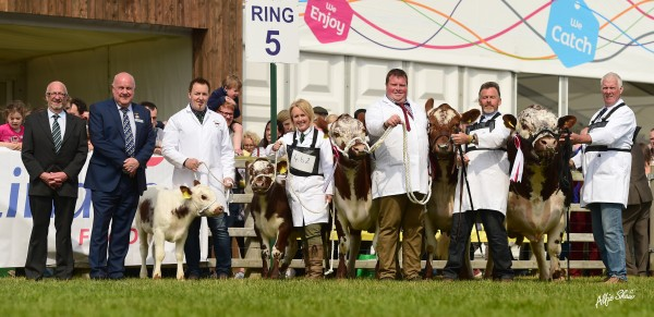 Irish Moiled and Dexter photo now online, click link below to view more images