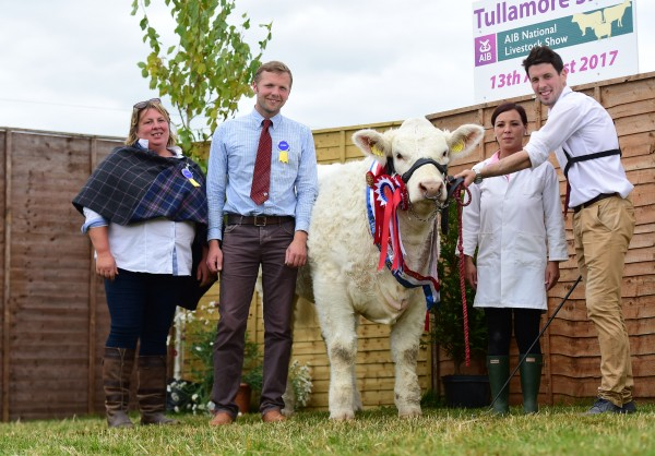 Senior Female Calf Champion and Overall National Charolais Show Champion for breeders, Brendan and Niall Canning from Rosses Point, Co. Sligo.