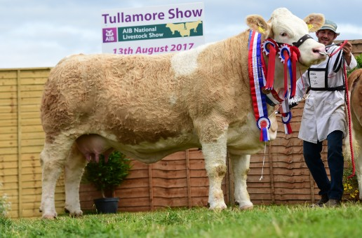 Irish Simmental Tullamore Show images now onlin