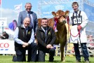 Leading ladies from the Trueman Herd at Balmoral 2018
