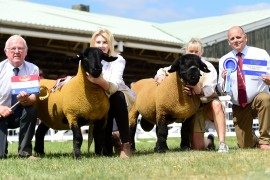 Great Yorkshire Show Suffolk images now online