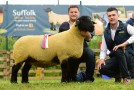 Suffolk NI National Show images now online