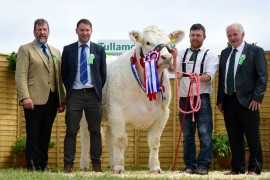 Bostonia Herd lift National Charolais Champion at Tullamore Show