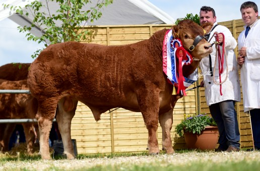 National Show Tullamore Limousin image now online