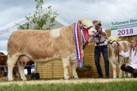 Behan Family lift Champion title at Tullamore Show