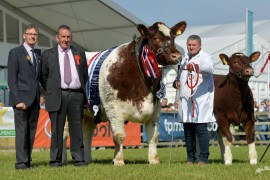 Beef Shorthorn clean sweep at Balmoral