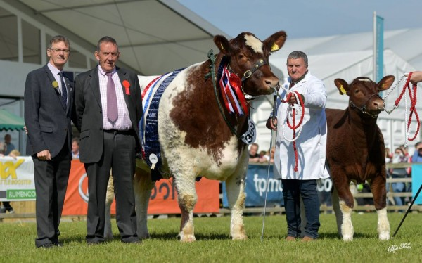 Duncan McDowell had a fantastic Balmoral Show winning over Interbreed title with his shorthorn cow. Click the link below to view shorthorn galleries