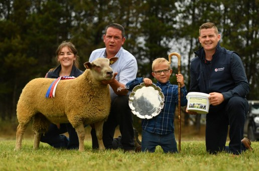 Charollais Sheep sell to a top of 4,400gns in Dungannon