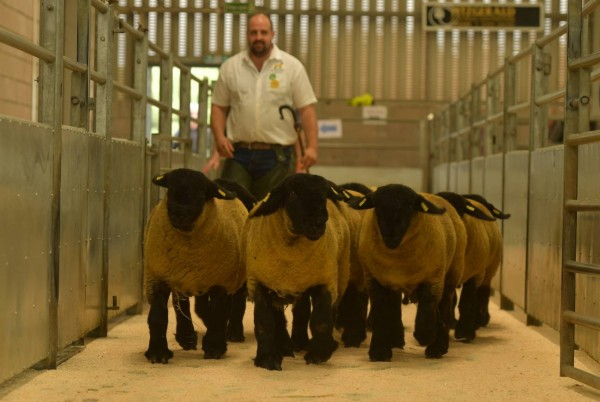 Dennis Taylor picture last year with his pen of lambs.  This year the show is on Thursday 22 July at 2pm with the sale on Friday 23rd July
